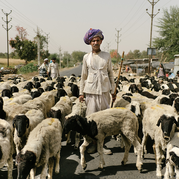 Like many Rajasthani shepherds, Lakan crosses large stretches of India, feeding his herd of over 400 goats along the way.<br /> Rajasthan Province.