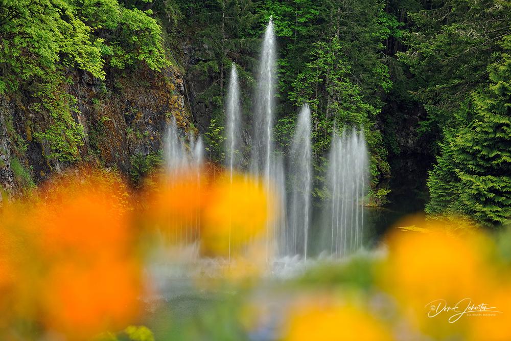 Butchart Gardens- Ross Fountain, Victoria, BC, Canada