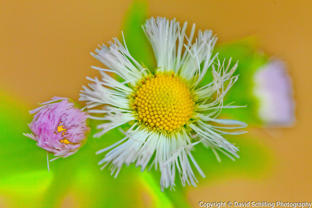 Flower on Yellow