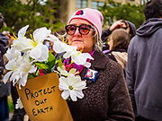 29 APRIL 2017 - MINNEAPOLIS, MINNESOTA: A woman walks down S 4th Street in Minneapolis during the People's Climate Solidarity March. Thousands of people marched through downtown Minneapolis and rallied around the US Federal Courthouse to participate in the People's Climate Solidarity March. The Minneapolis march coincided with other marches to protest the climate change policies of President Trump and the Republican Party that were held across the US. It took place just one week after a series of large marches in support science and fact based decision making.     PHOTO BY JACK KURTZ