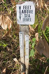 Water Mark Above Sea Level, Audubon Corkscrew Swamp Sanctuary