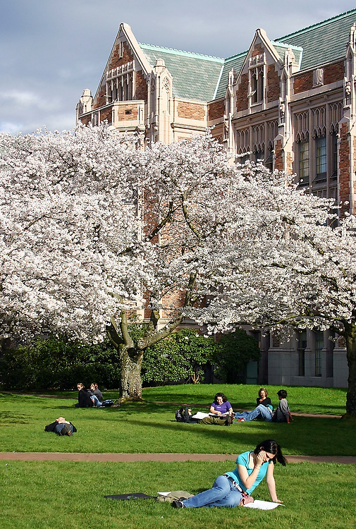 Students hang out, study and lay out on the grass under the blooming cherry trees in the Quad, below Miller Hall, at the University of Washington campus in Seattle, Washington on March 8, 2005.