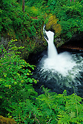 Image of a waterfall along the Eagle Creek Trail in the Columbia River Gorge, Oregon, Pacific Northwest by Randy Wells