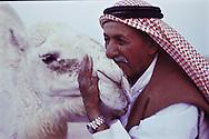 Sheikh Jaber Alamrah with one of his white camels in Hafar Al-Batin, Saudi Arabia