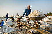 """28 MARCH 2014 - NA KHOK, SAMUT SAKHON, THAILAND: Workers move salt from an evaporation pond to a drying area in Samut Sakhon province. Thai salt farmers south of Bangkok are experiencing a better than usual year this year because of the drought gripping Thailand. Some salt farmers say they could get an extra month of salt collection out of their fields because it has rained so little through the current dry season. Salt is normally collected from late February through May. Fields are flooded with sea water and salt is collected as the water evaporates. Last year, the salt season was shortened by more than a month because of unseasonable rains. The Thai government has warned farmers and consumers that 2014 may be a record dry year because an expected """"El Nino"""" weather pattern will block rain in mainland Southeast Asia. Salt has traditionally been harvested in tidal basins along the coast southwest of Bangkok but industrial development in the area has reduced the amount of land available for commercial salt production and now salt is mainly harvested in a small parts of Samut Songkhram and Samut Sakhon provinces.    PHOTO BY JACK KURTZ"""