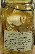 Fish speciment at Tulane University's Natual Hiistory Museum