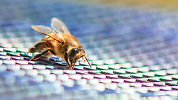 A Macro Closeup Of A Bee On A Flyswatter