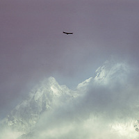 A lamageyer eagle flies in front of Mt. Ama Dablem in the Khumbu region of Nepal. 1979