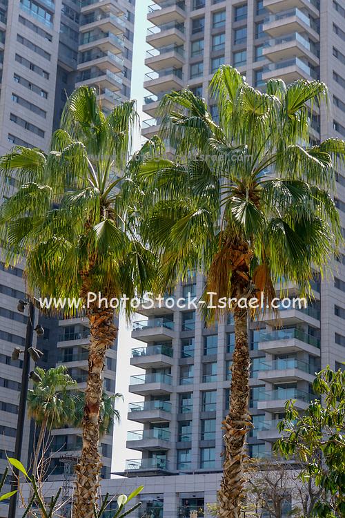 Modern residential Highrise. Tel Aviv, Israel
