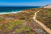 Skunk Point trail, Santa Rosa Island, Channel Islands National Park, California USA
