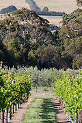 Babenorek Winery & Olive Grove
