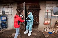 20.02.2014 woj podlaskie W wojewodztwie podlaskim stwierdzono 2 potwierdzone przypadki afrykanskiego pomoru swin ( ASF ) u padlych dzikow tuz przy granicy z Bialorusia. Jest to ostra choroba zakazna swin, niegrozna dla ludzi, lecz powodujaca znaczne straty ekonomiczne, poniewaz zarazone lub podejrzane o kontakt stada trzody chlewnej nalezy wybic i utylizowac. Z zarazonych krajow wstrzymuje sie rowniez import wieprzowiny ( na razie zrobily to Rosja i Bialorus ) N/z inspekcja weterynaryjna w gospodarstwie Adam Kudaszewicza we wsi Babiki fot Michal Kosc / AGENCJA WSCHOD