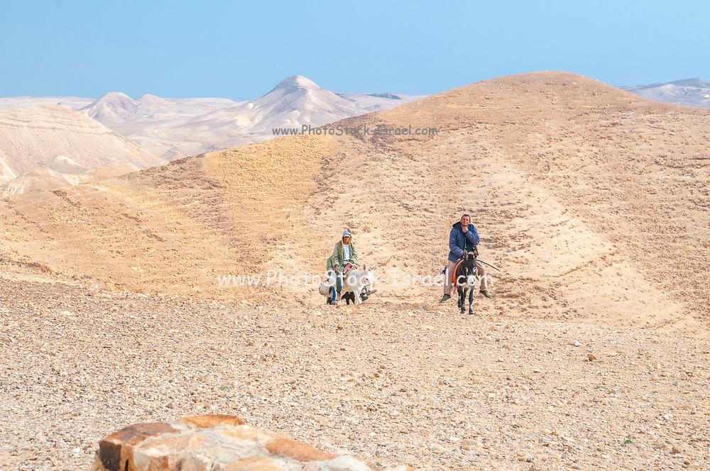 Beduin ride donkeys in the Negev Desert. Photographed in Nahal  Tzeelim [Tze'eelim Stream] in December