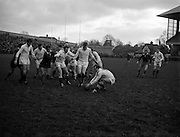 31/01/1959<br /> 01/31/1959<br /> 31 January 1959<br /> Final Irish Rugby International Trial at Lansdowne Road, Dublin. A.A. Mulligan, (London-Irish) Whites scrum-half gets possession of the ball from the ground as Dawson (third from left) wards off opposition.