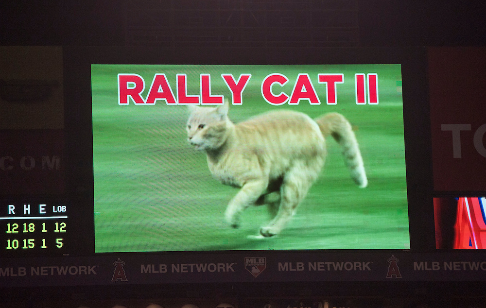 The Rally Cat is shown on the scoreboard during a bases loaded rally in the ninth inning during the Angels' 12-10 loss to the St. Louis Cardinals Thursday at Angel Stadium.<br /> <br /> //ADDITIONAL INFO:   <br /> <br /> angels.0405.kjs  ---  Photo by KEVIN SULLIVAN / Orange County Register  -- 5/12/16<br /> <br /> The Los Angeles Angels take on the St. Louis Cardinals Thursday at Angel Stadium.