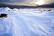 Snow Drift, Mount Wellington Forest Park - Tasmania