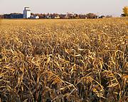 Corn field and grain elevator, Mapes, Nroth Dakota.