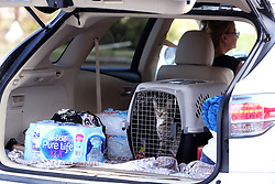 August 29, 2017 - Rockport, Texas, U.S. - A cat sits in a crate in the back of a car as a woman gets water, ice and bread from H-E-B's Disaster Response Unit on Tuesday.  (Credit Image: © Rachel Denny Clow/TNS via ZUMA Wire)