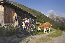 Young couple of mountain bikers stroking calf, Zillertal, Tyrol, Austria