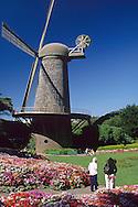 Dutch windmill in the Queen Wilhelmina Tulip Garden, Golden Gate Park, San Francisco, California