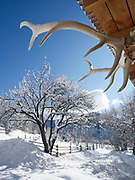 Antlers mounted under eaves frame snow-covered tree