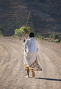 Lady carrying Bay leaves, Gheralta Mountains, Tigray region. Ethiopia, Horn of Africa