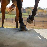 20121010 Horse Loading in Trailer