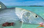 Protective scales shine like fine jewelry in the pacific sun.