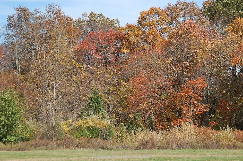 A small sample of the autumn colors at the Princeton Nursery, Princeton, NJ