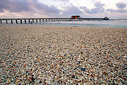Shells washed onto the beach in Naples, Florida, USA.