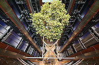 Celebrity Equinox, a brand new cruise ship belonging to Celebrity Cruises, during her river conveyance down the River Ems from the shipyard where she was built to the open sea..Onboard feature photos. (ship unfinished).A Ficus tree suspended in a lift atrium.