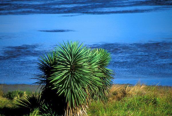 Laguna Atascosa