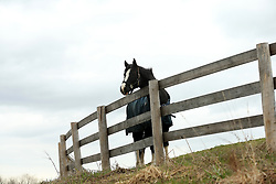 April 30, 2019 - ON, Canada - TORONTO. Horses graze at Stonewood Equestrian under the overcast sky on 16 Sideline, Claremont, just outside Toronto.(Rene Johnston/Toronto Star) Rene Johnston/Toronto Star (Credit Image: © Richard Lautens/The Toronto Star via ZUMA Wire)
