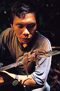 Santos Perez, of the indigenous Yanomami people, looks at a freshly captured Theraphosa leblondi, the world's largest tarantula, on the edge of his machete, Sejal, Venezuela. (Man Eating Bugs page 174 Bottom)