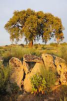 Cork oak, Faia Brava reserve, Côa valley,<br /> Portugal
