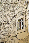 window with vines against a brown wall