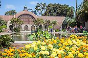 The Reflection Pool at the Botanical Building at Balboa Park San Diego