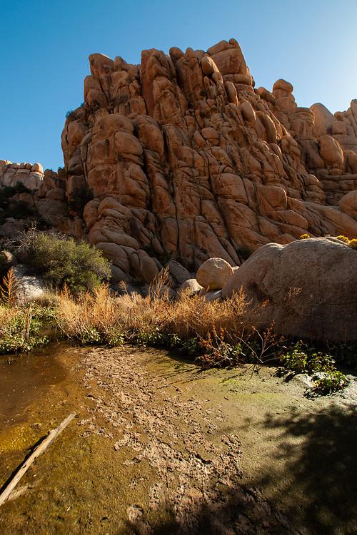 Willow Hole Trail, Wonderland of Rocks, Joshua Tree National Park, California, US