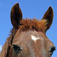 Europe, Ireland. Colse up of horse face