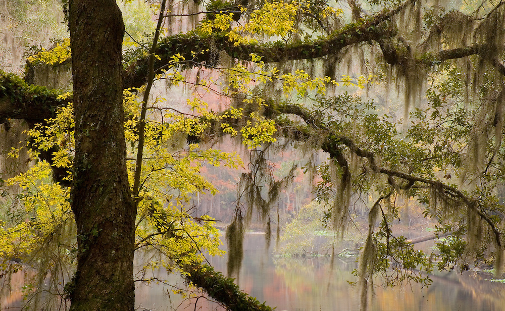 River Rise State Park, Florida.