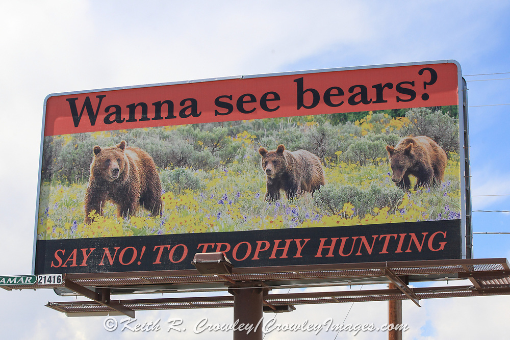 Billboard placed in Cody, Wyoming by a group called Wyoming Wildlife Advocates calling for the ban of trophy hunting.