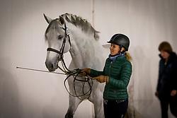 Caetano Maria, POR, Coroado<br /> Jumping Mechelen 2019<br /> © Hippo Foto - Sharon Vandeput<br /> 27/12/19
