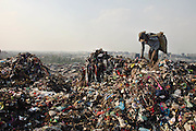 New Delhi, India - <br /> <br /> Garbage Mountain<br /> <br /> Just a few miles from the famous Akshardham temple, where tourists flock to see the structure's sandstone and marble work, the 29-hectare, slum-surrounded Ghazipur landfill in east Delhi seems a world apart. Each day hundreds of mainly migrant workers earn a meager living at the landfill by collecting recyclable material like plastic, metal and even hair to sell. The dump is the last port of call for Delhi's trash, having already been picked through by other waste collectors who collect bags of garbage directly from homes. Delhi is home to three landfills where around 6,000 tons of trash is dumped daily. Studies have shown that living near a landfill increases the risk of cancer, birth defects and asthma.<br /> <br /> Photo shows: QASIM ALI, a native of West Bengal, has been working at Ghazipur landfill for the past twelve years. He came to the capital with the hopes of finding a job. Unable to find employment, and perhaps unable to speak the local language, he eventually turned to ragpicking, gathering trash at the dump to sell as recyclables.<br /> ©Chinky Shukla/Exclusivepix Media