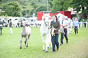 Glencarrig Princess and Foal with Amy and Gearoid Curran winners of the 10-15 year old Mares and the O'Sullivan Memorial Shield.   at the 90th Connemara Pony show in Clifden Co. Galway. Photo:Andrew Downes