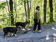 A forest in Terentino, Northern Italy local shepherd with his sheepdogs