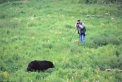 Photographing Black Bear