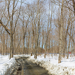 A dirt road in the Rodrique family sugarbush in Big Six Township, Maine.