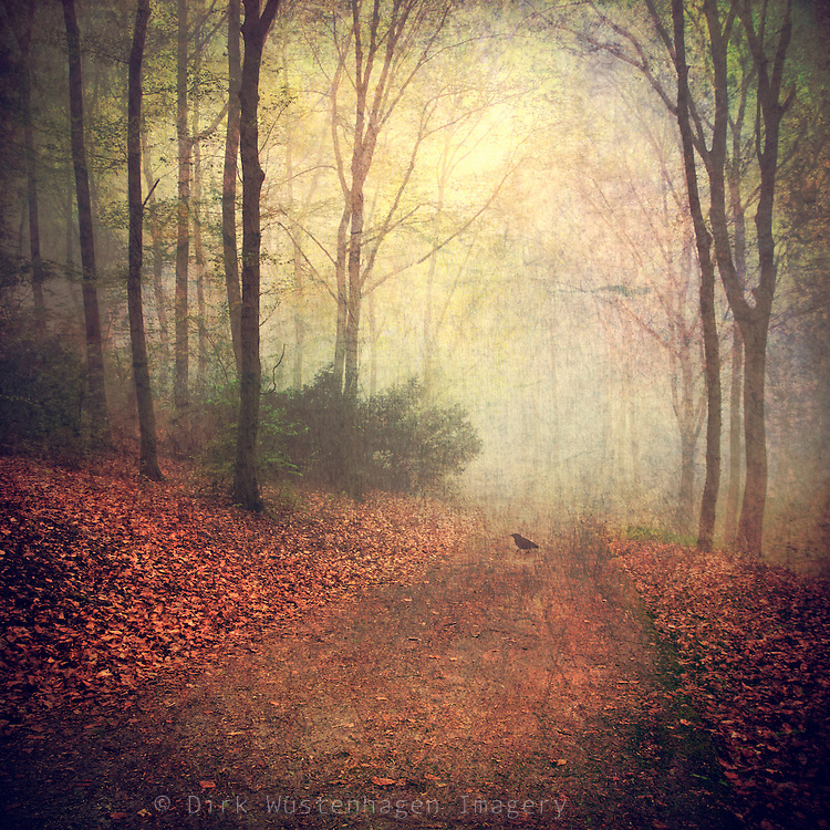 Forest shrouded in fog with a bird psitting on the ground.<br /> <br /> Prints & more:<br /> http://society6.com/product/Fall-Legends_Print