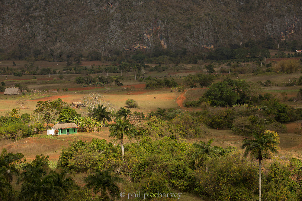 High angle view of farm with palm trees near mountains, Vinales, Cuba