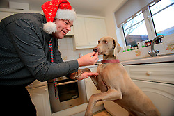 UK ENGLAND WILTSHIRE MELKSHAM 17DEC09 - Andy Park, self-proclaimed Mr Christmas feeds his dog Sky with turkey leftovers after he celebrated Christmas every day at his home in Melksham, Wiltshire. Mr Park, a 45-year-old divorced electrician, has consumed nearly 118,000 brussel sprouts and about 5000 bottles of Moet champagne since he decided to get into the festive spirit full-time in July 1994.jre/Photo by Jiri Rezac© Jiri Rezac 2009